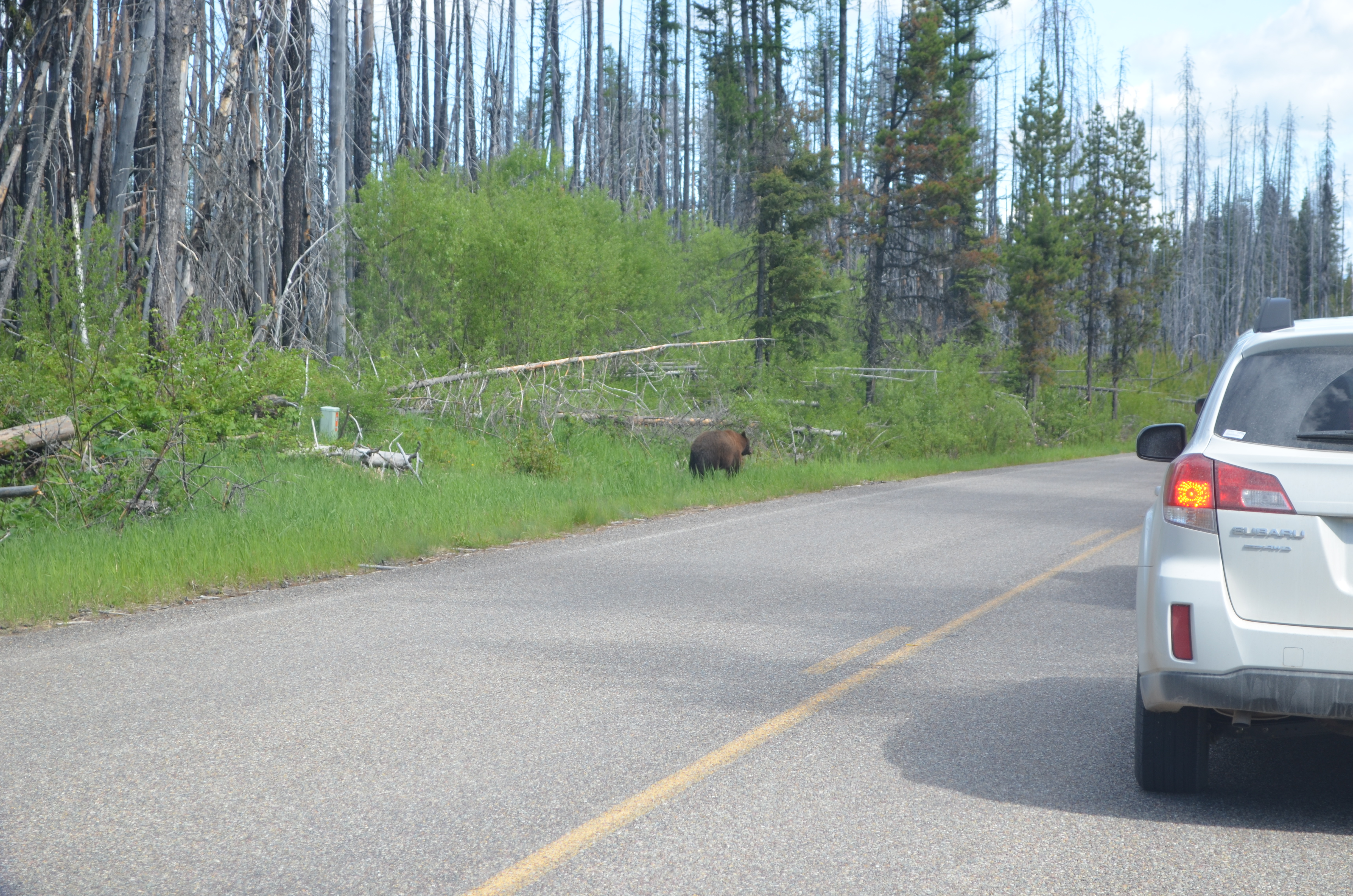 Fish creek campground jimbo 39 s journeys for Fishing in glacier national park